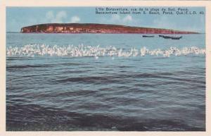 Bonaventure Island from S.Beach, Perce, Quebec, Canada,  40-60s