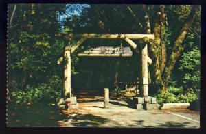 San Francisco, Calif/CA Postcard, Gateway To Muir Woods