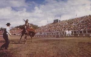 Bucking Horse at Rodeo