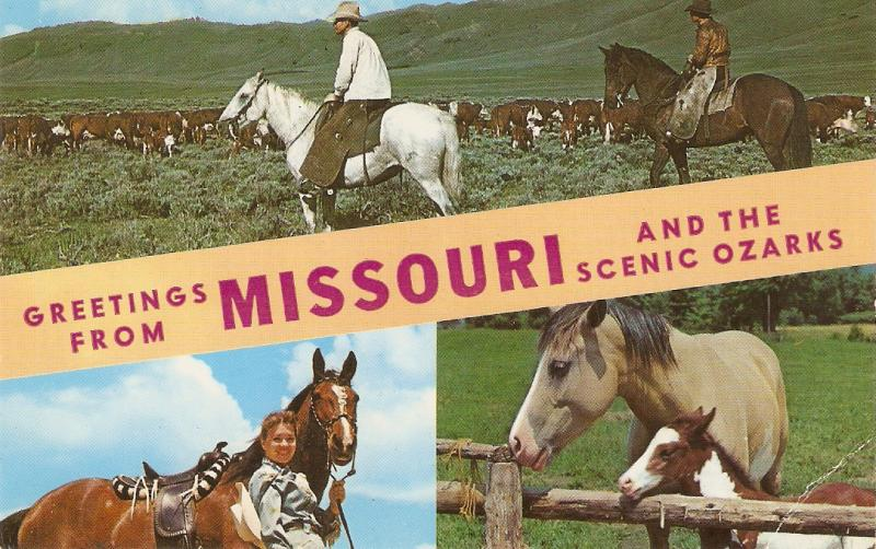 Greetings from mISSOURI. Horses Nice American pc 1950s