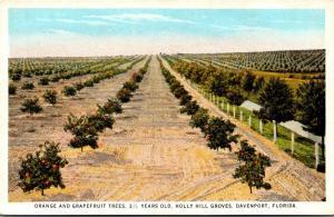 Florida Davenport Holly Hill Groves Orange and Grapefruit Trees 1931