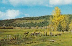 Canada Green Pasture Scene British Columbia