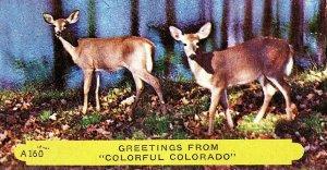 1953 Greetings From Colorful Colorado Deer Vintage Postcard Standard View Card