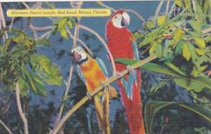 Florida Miami Parrot Jungle Colorful Macaws 1953