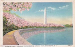 Flowers Washington Monument Riverside Drive Along Potomac River With Cherry B...
