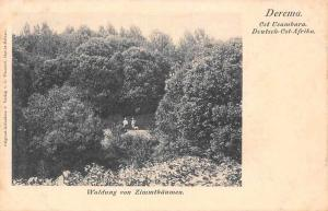German East Africa Tanzania Derema Ost Usambara, Waldung von Zimmtbaeumen