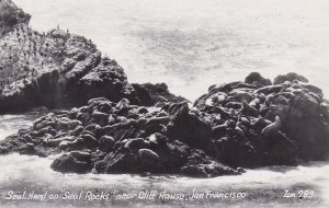 California San Francisco Seal Herd On Seal Rocks Near Cliff House Real Photo