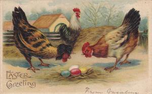 EASTER; Greeting, Rooster, Hens staring at colored eggs, PU-1908