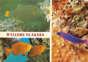 Jordan Aqaba, Red Sea, underwater scenery, fishes fish poisson, multiviews