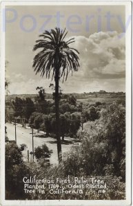 CALIFORNIA'S FIRST PALM TREE RPPC 1946 OLD TOWN SAN DIEGO