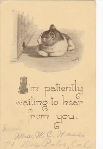 Cavally Cat Series I'm Patiently Waiting To Hear From You 1913