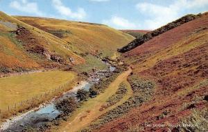 Exmoor The Doone Valley Creek