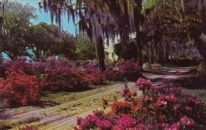 South Carolina Low Country Plantation South Carolina
