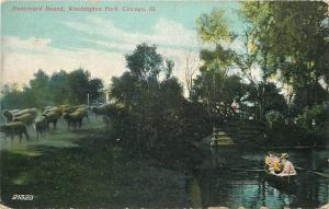 Chicago~Washington Park~Homeward Bound Sheep on Bank~Ladies in Rowboat~1909