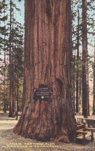 Register Here Giant Redwood Tree Lane's Redwood Flat On Redwood Highway Calif...