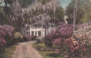 Driveway to the Postern , SUMMERVILLE , South Carolina , 00-10s