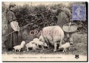 Old Postcard Pig Pig Folklore harvest of truffles Memories & # 39excursion TOP