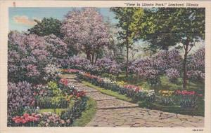 Illinois Lombard View In Lilacia Park Curteich