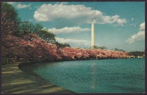 Washington Monument,Washington,DC Postcard