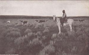 Sunset On The Cattle Range