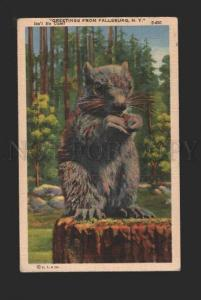 078767 MARMOT with Greeting from FALLSBURG, N.Y. vintage PC