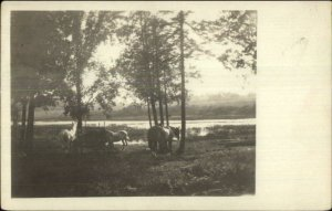 Horses & Trees South Orrington ME Cancel 1920 Real Photo Postcard