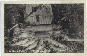 RPPC, A Day's Catch of Fish at Idyllwild, California CA, fishing, EKC Real Photo