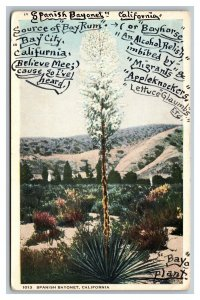 Postcard Spanish Bayonet California Bay Rum Bayhorse Appleknockers Bayo Plant