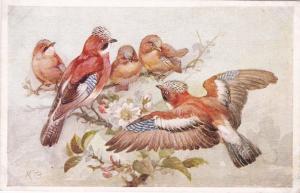 Birds , AS M.B. , 40-50s