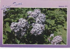 Highland Park NY, Rochester, New York - Lilac Time Again - pm 1987