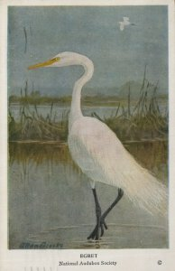 Vintage Postcard Egret National Auduborn Society Copyrighted