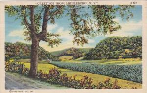 New York Greetings From Middleburgh Curteich