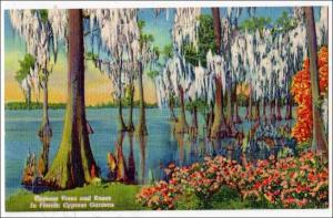 Cypress Trees & Knees, Cypress Gardens FL