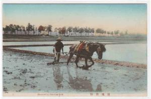 Harrowing Rice Field Farming Japan 1910s postcard