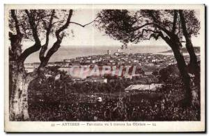 Old Postcard Antibes Panorama seen through the olive trees