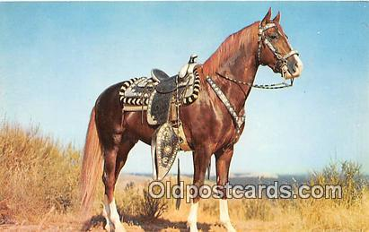 Hoss Color by Theda & Emerson Hall Postcard Post Card Color by Theda & Emerso...