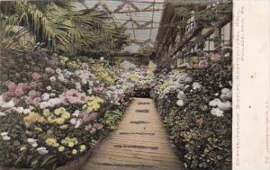 Pennsylvania Philadelphia Chrysanthemum Display Horticultural Hall