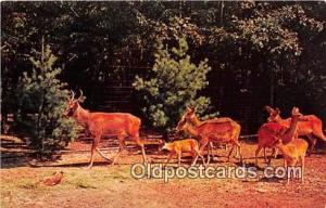 Catskill, NY, USA Golden Yellow Barasingha Deer, Catskill Game Farm Postcard ...