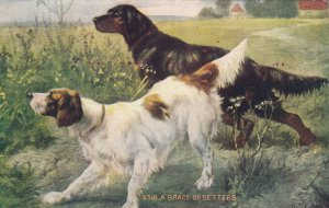 A brace of Setter dogs , 00-10s