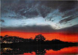 Amazon Forest Brazil sunset card 2scans