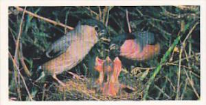 Brooke Bond Vintage Trade Card Woodland Wildlife 1980 No 13 Bullfinch
