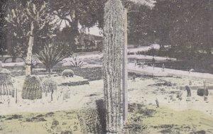 Cactus , LAKE WORTH , Florida ; PU-1917
