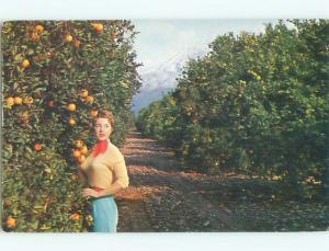 Pre-1980 Risque SWEATER GIRL IN ORANGE GROVE state of California W6487