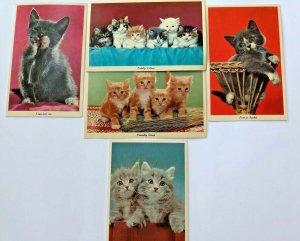 Vintage 50s Kittens Licking Paw Basket Novelty Cat Postcard Lot CurteichColor