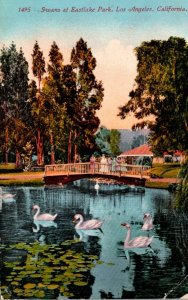 California Los Angeles Swans At Eastlake Park 1913