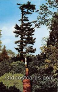 Charlottesville, VA, USA Boxwood Gardens Ash Lawn