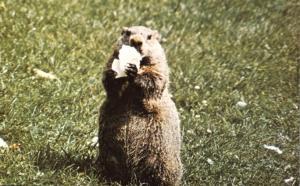 Groundy the Gourmet Groundhog - Ephrata PA, Pennsylvania