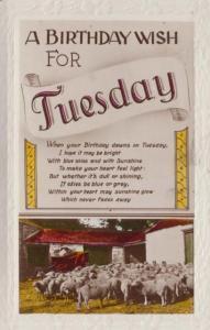 Herd Of Sheep Farm Farming Tuesday Birthday Antique Cart Birthday Photo Postcard