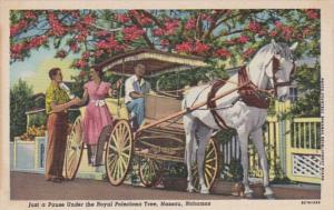Bahamas Nassau Horse and Carriage Pausing Under The Royal Poinciana Tree Curt...