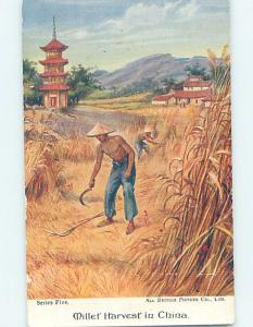 Old Postcard MILLET HARVEST SCENE Country Of China F4889